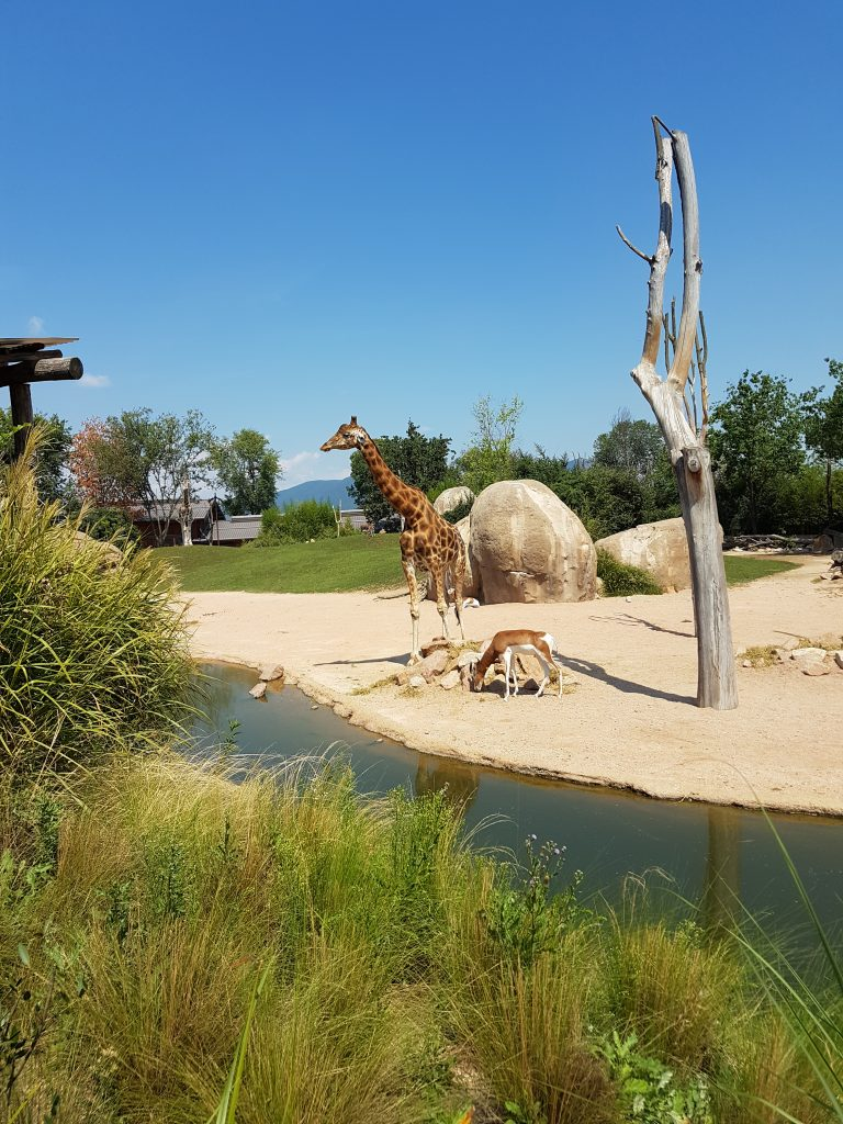 giraffe parchi a tema
