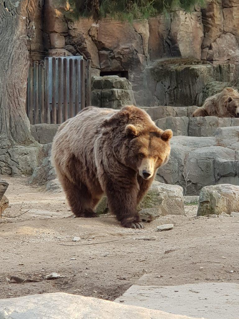 orso nello zoo per bambini di madrid