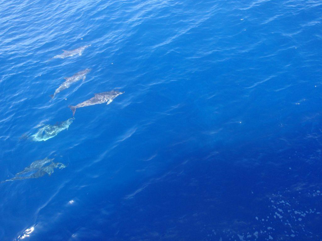 oceano d gran canaria