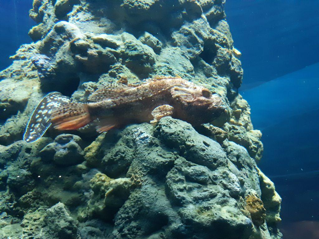 pesce roccia