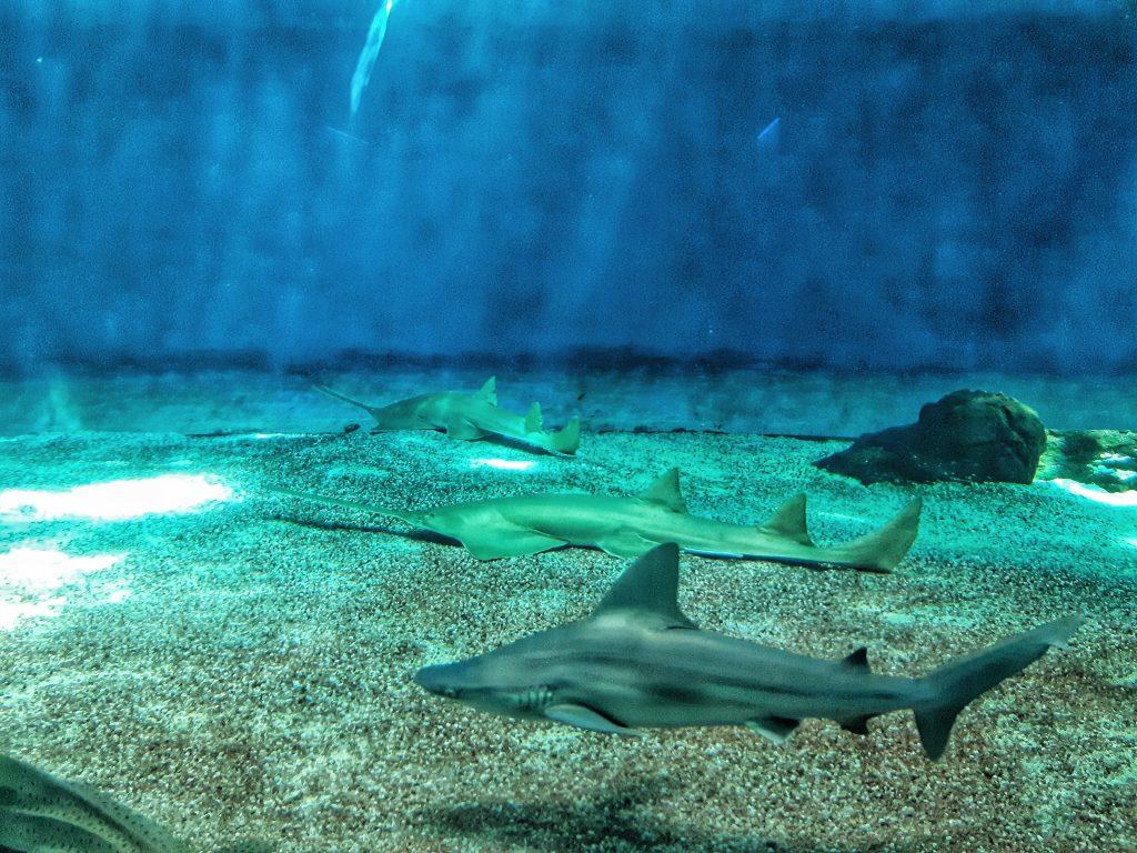 squalo e pesci sega